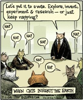 les chats au pouvoir